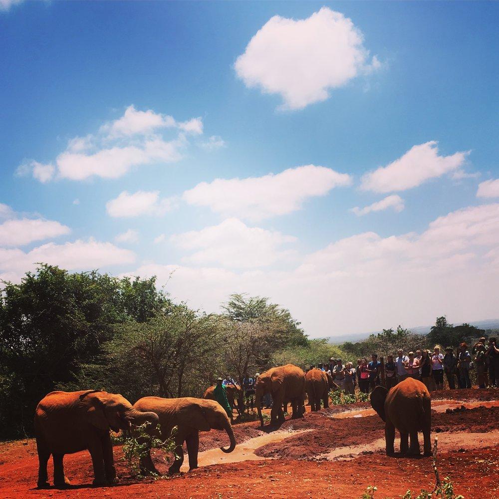 Elephant orphanage.JPG