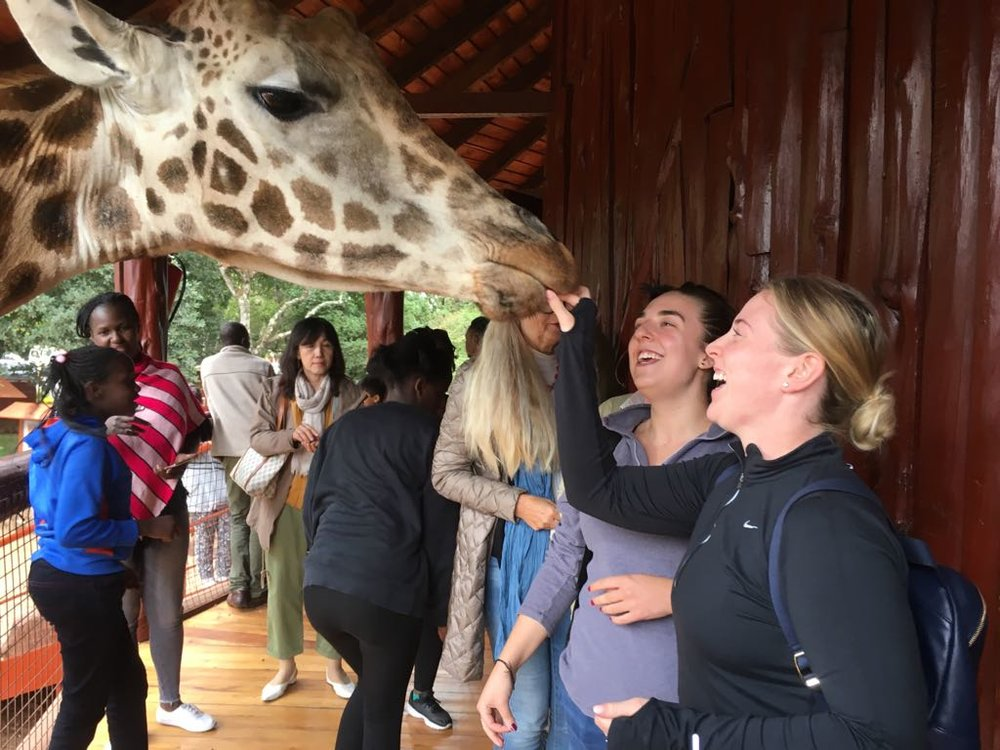 Feeding giraffes.jpg