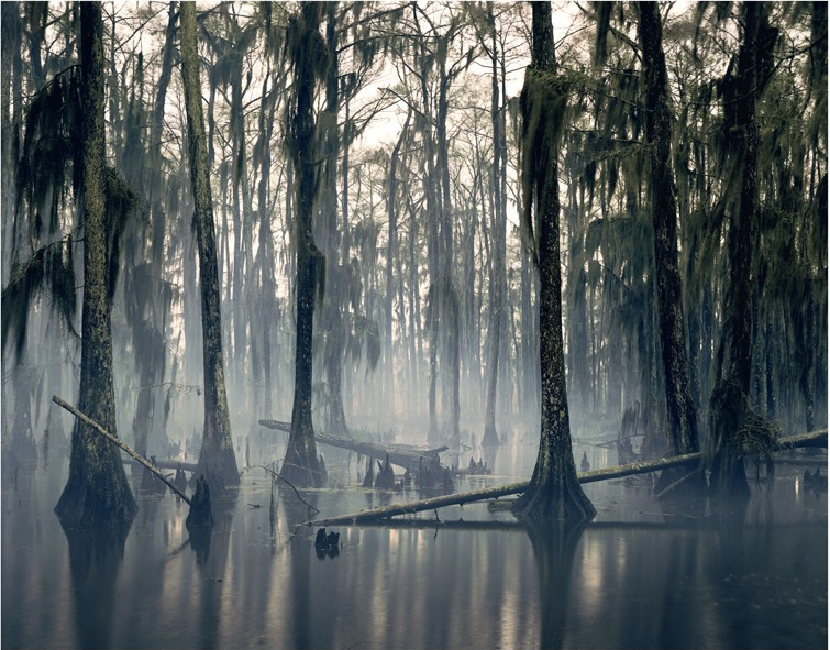 Spanish Moss, Louisiana, USA, 1997 (2013) - 51 x 61 cm (20 x 24 in), signed edition of 100Archival pigment print on Hahnemühle photorag 308$2250