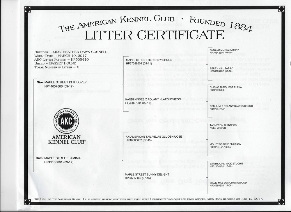 """A"" Little Secret Litter Certificate"