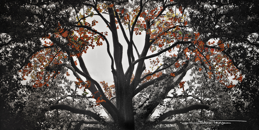 Spider Tree Painted Autumn