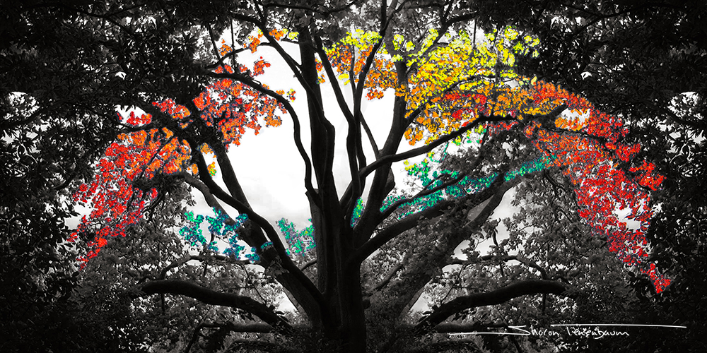 Spider Tree Painted Rainbow