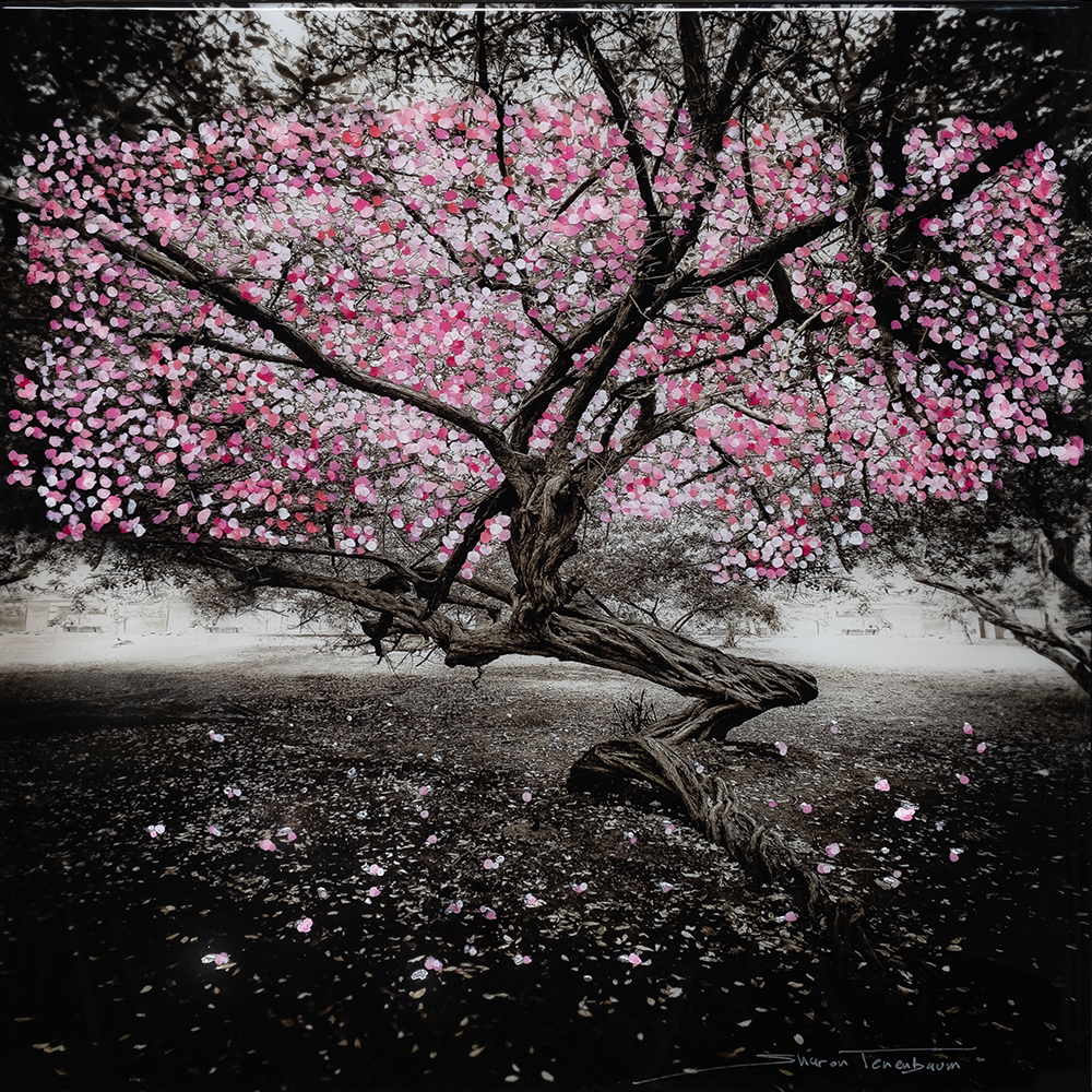 Cherry Blossom Tree Painted