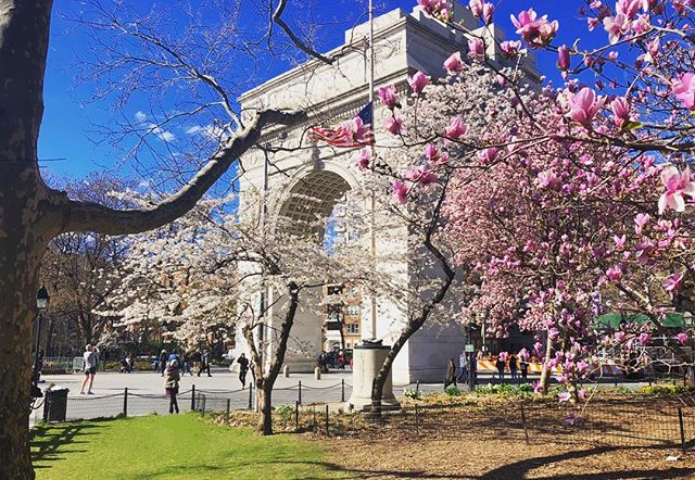 Spring has arrived in Washington Square! ☀️🌷🌳