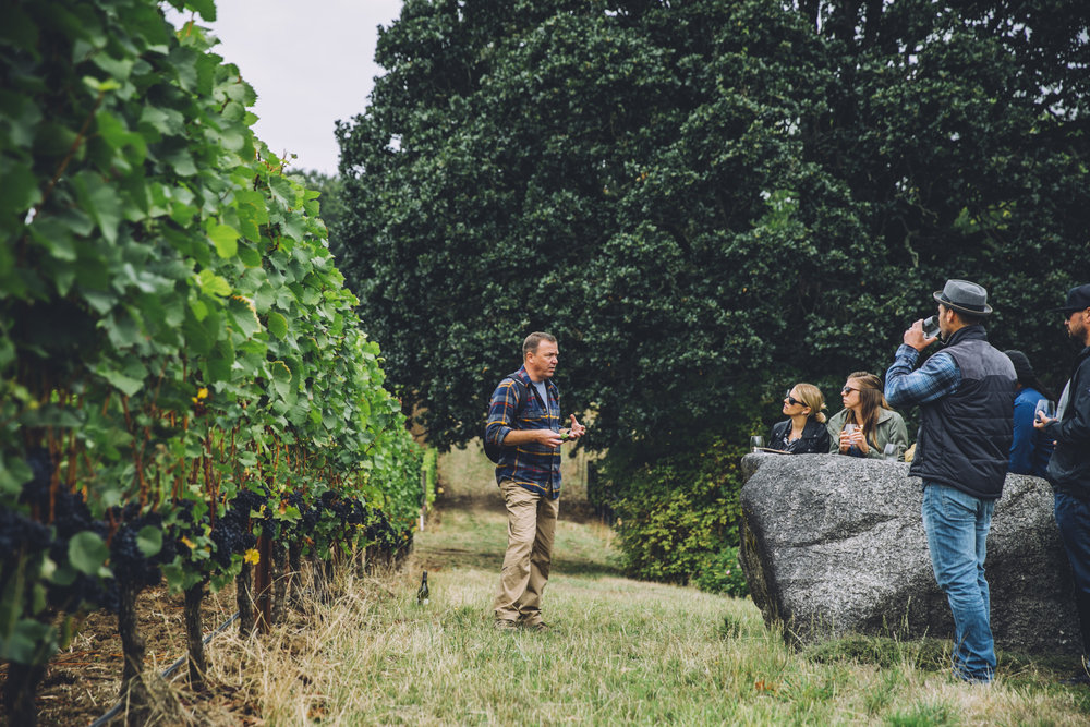 Adelsheim Wine Education and Vineyard Tour