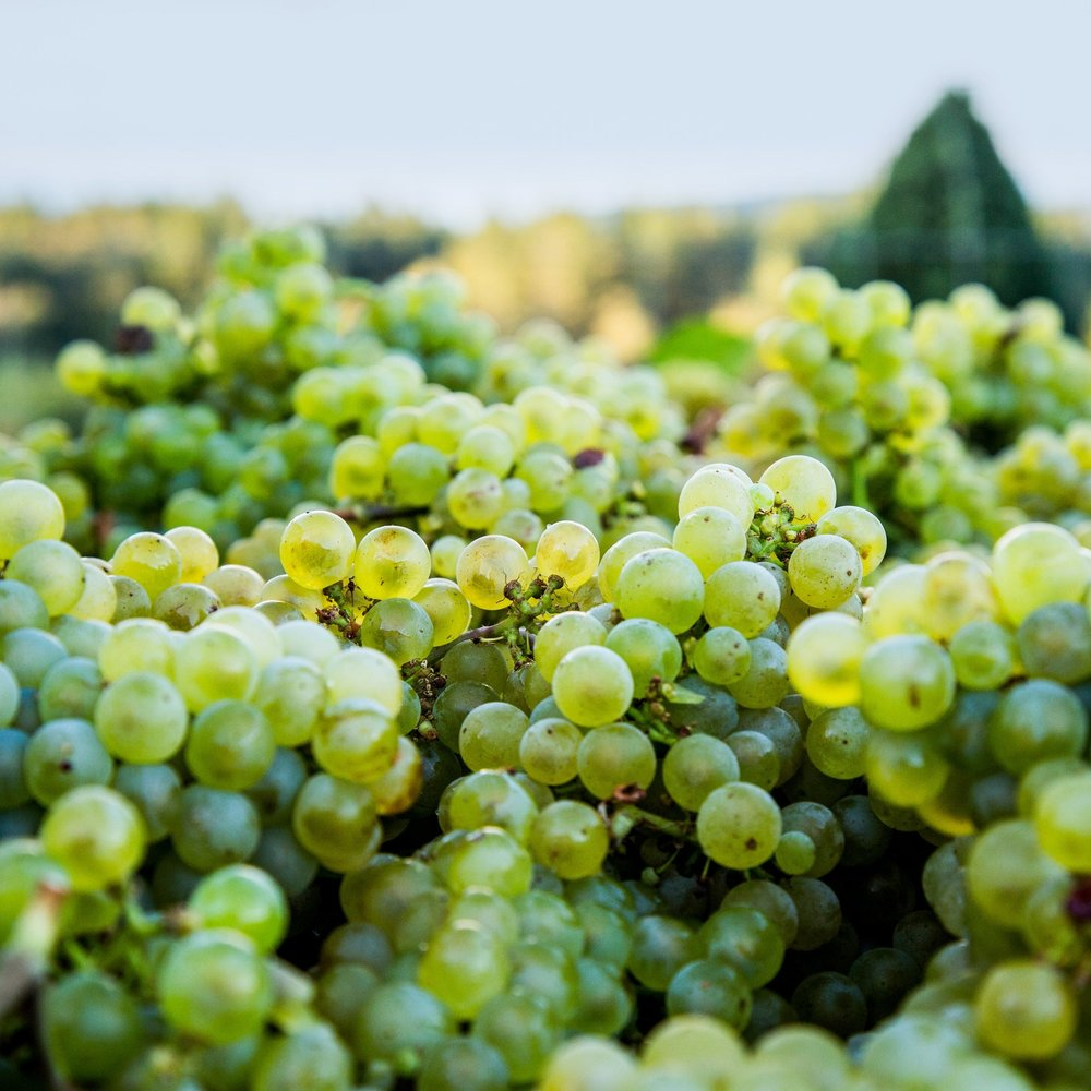 Wine Event - Discovering Willamette Valley Chardonnay