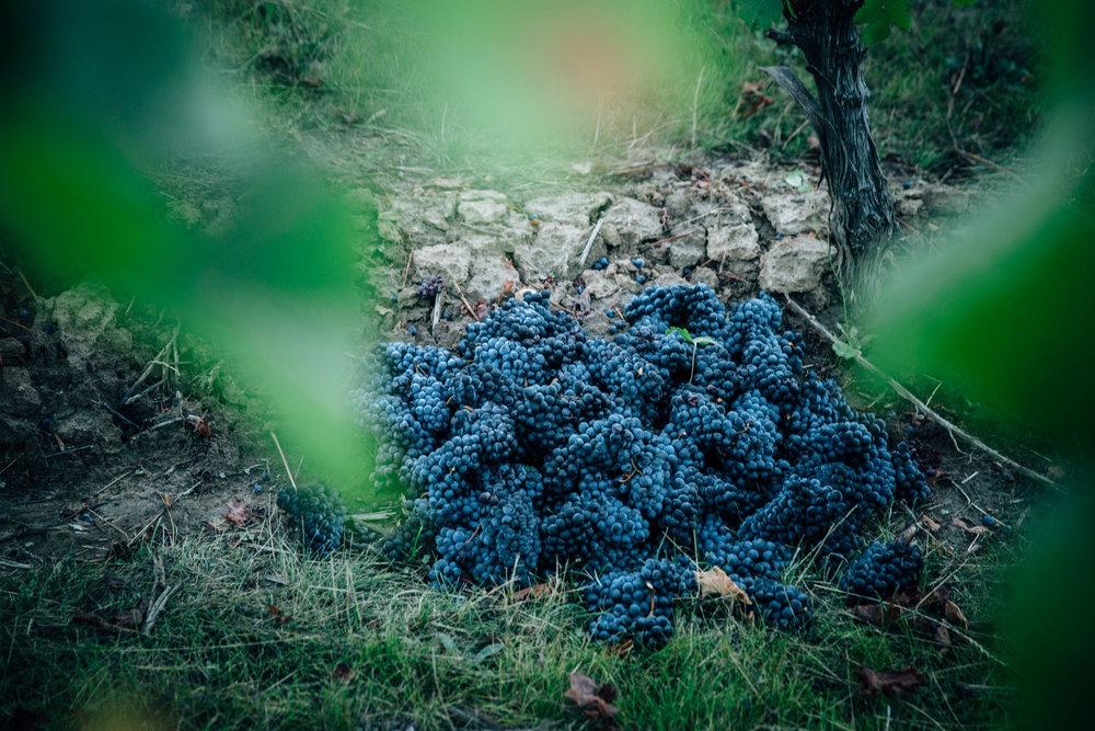 Wine_Soil_Types.jpg