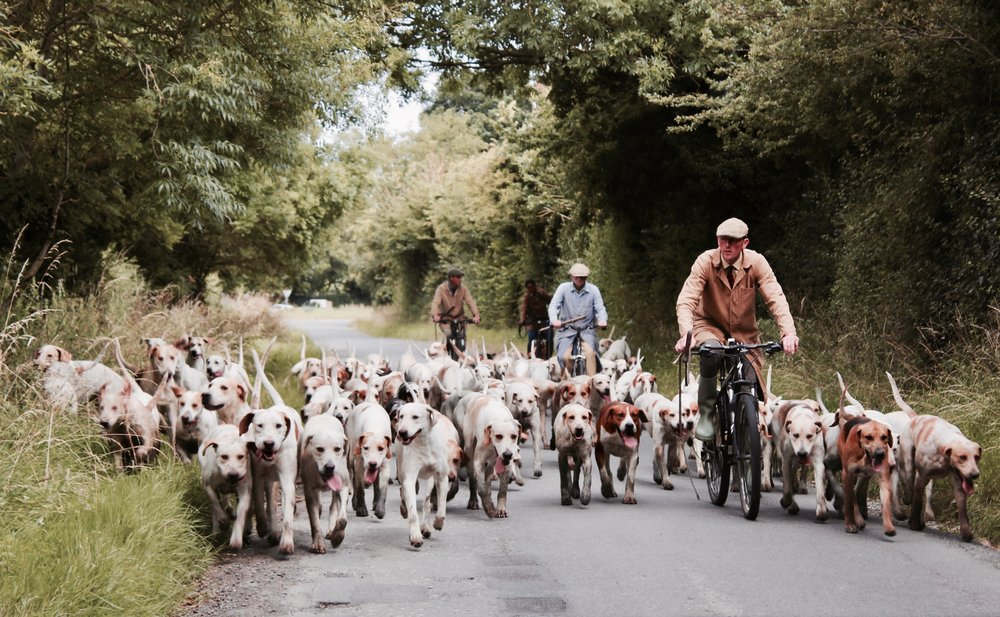 Burgundy; Riding bikes with dogs