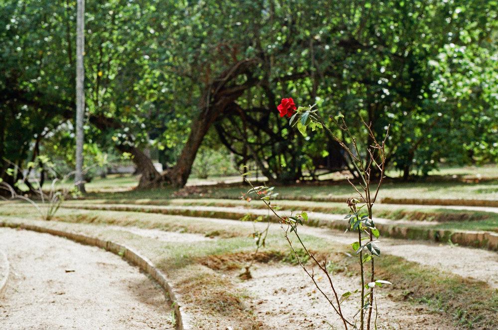Botanical Plant 3.jpg
