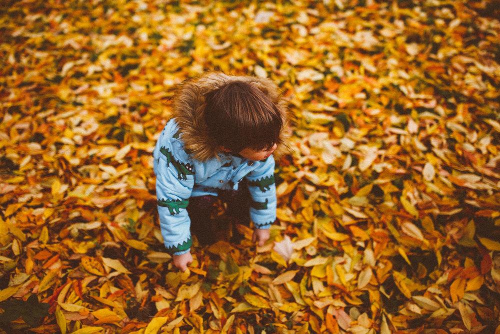 fall_cranbrook_hugolovestiki16.jpg