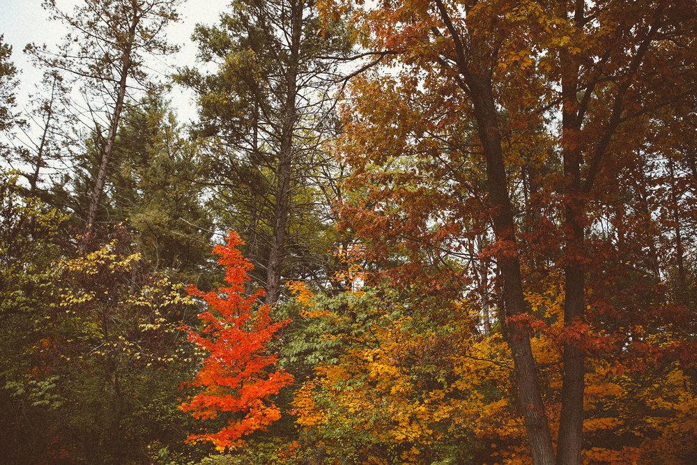 fall_cranbrook_hugolovestiki81.jpg