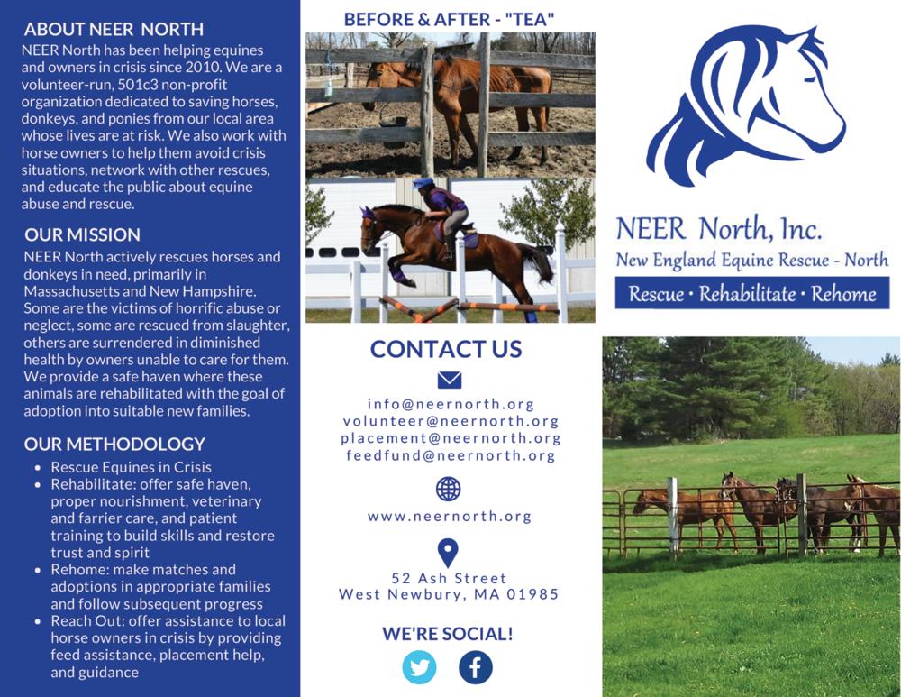 Non Profit Equine Rescue Brochure - Front
