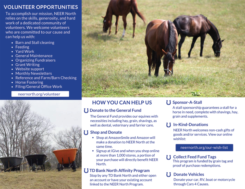 Non Profit Equine Rescue Brochure - Back
