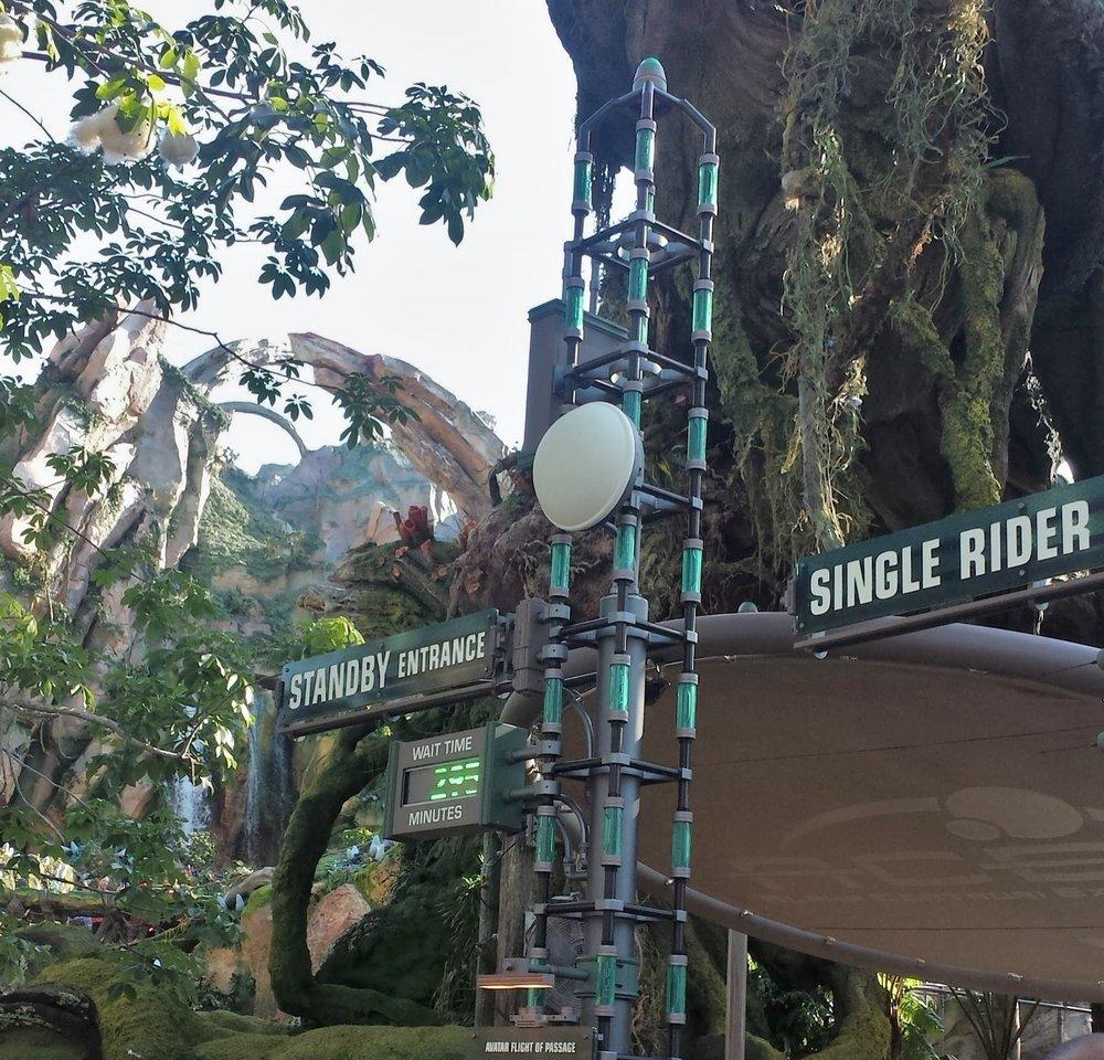 Disney | Pandora Land | Disney tips | Animal Kingdom Tips | Disney vacation | Animal vacation | What to do at Disney