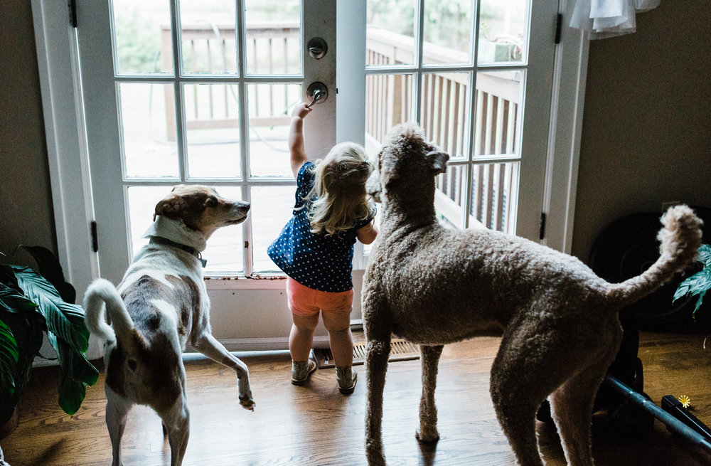 Family lifestyle photography child at home with dogs Ore Adesina Photography Oklahoma City