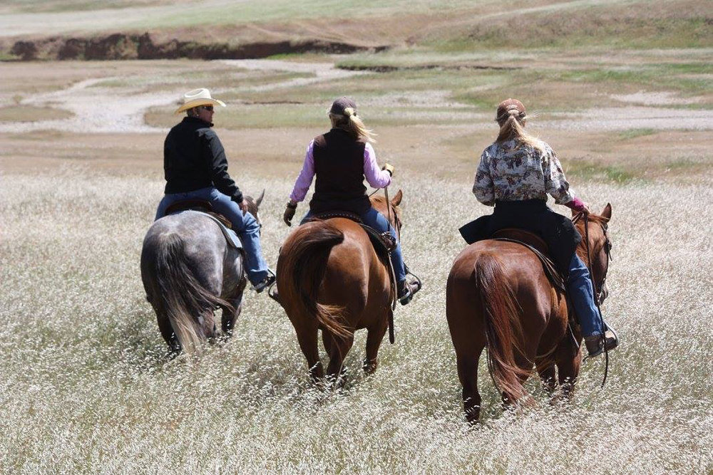 We were not ranchers… - but were seeking something better. When the opportunity to farm Emily's family's ranch came about we decided to take up the challenge. The connection with the land had long been established in our family. Emily grew up riding on the property and working the cattle in the summer. However, the learning curve to owning and operating a ranch is steep and we are still learning. Emily, an interior designer by trade and Ned, internet software expert had little knowledge about what it takes to run a 520 acre ranch. This did not thwart our ambition and desire to bring new life to a conventional cow-calf operation that has existed on the ranch for decades.