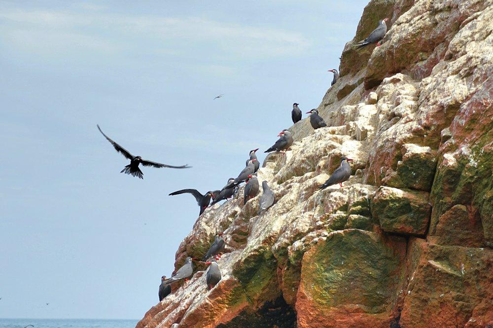 Ballestas Islands 3.jpg