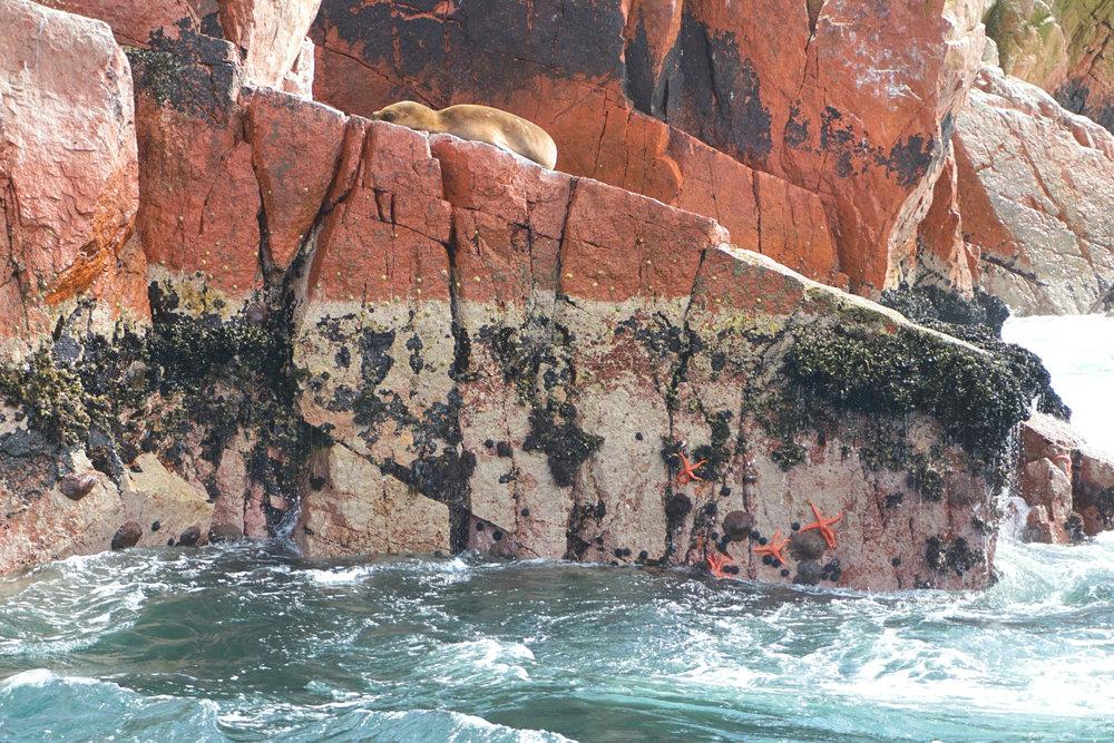 Ballestas Islands 4.jpg