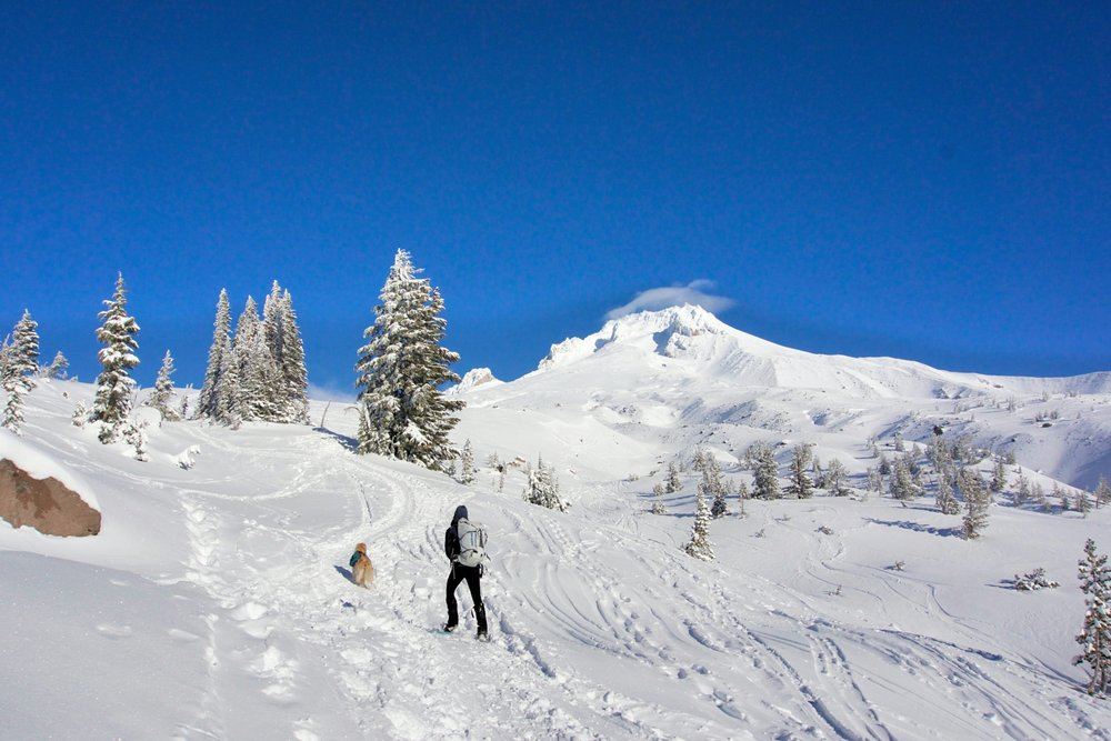 Snowshoeing on Mount Hood