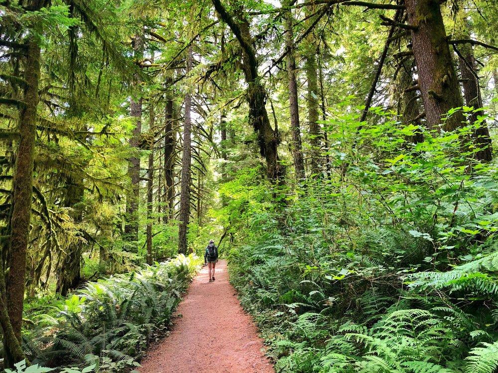 Silver+Falls+State+Park,+Oregon.jpeg