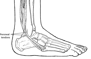 peroneal_injuries.png