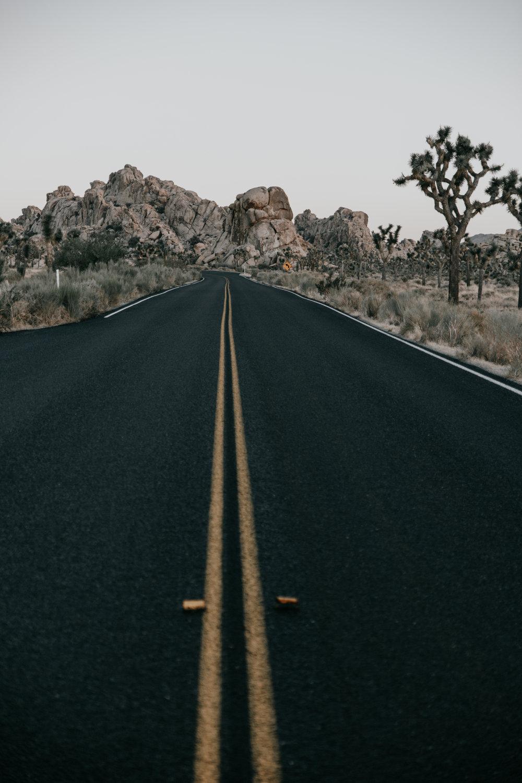 Open roads | J Tree National Park