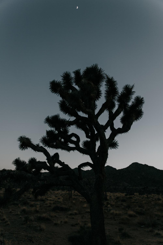 Nights in the desert