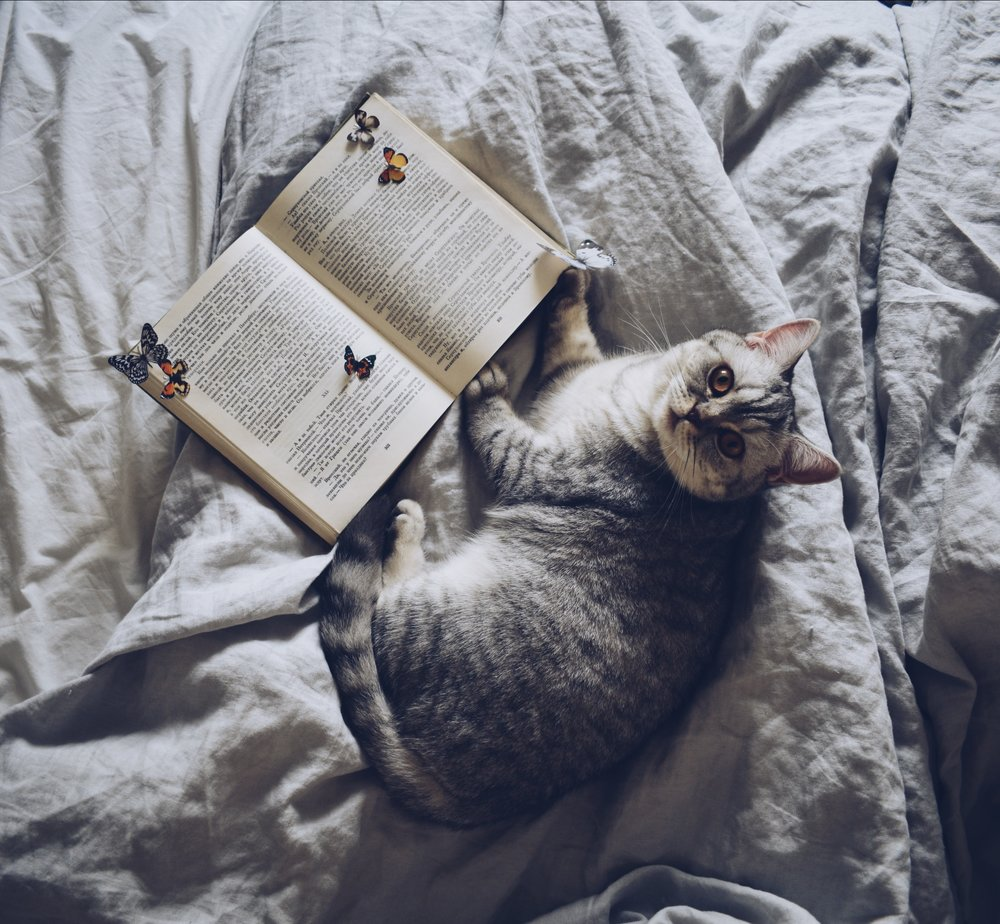 Cat in bed with a book