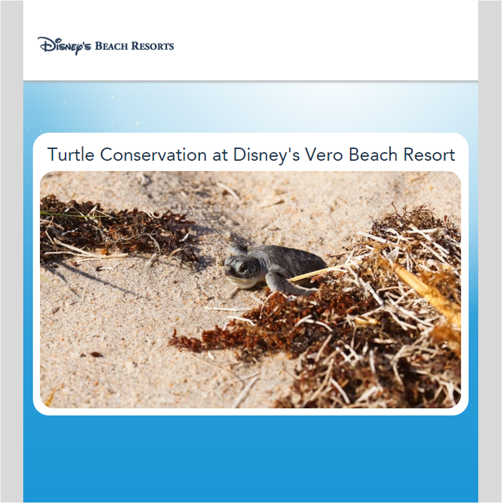 CORPORATE SOCIAL RESPONSIBILITY   Turtle Conservation at  Disney's Vero Beach Resort