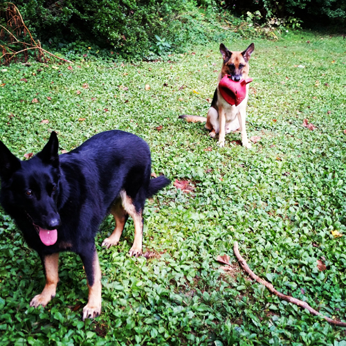 Madison (left) and Titus (Right) playing in our back yard