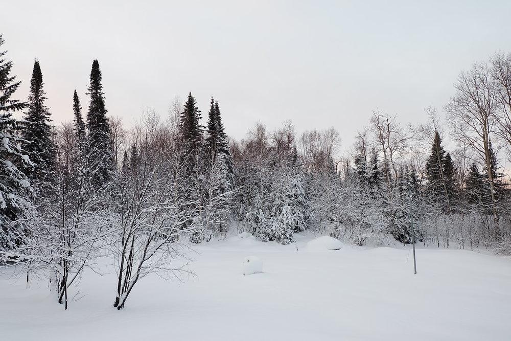 arbres-abitibi-neige-hiver-paysage