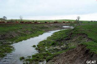 - Cours d'eau fortement érodé suite à l'accès du bétail