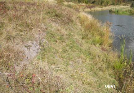 Stabilisation d'une pente dénudée par l'installation d'une toile de fibres de coco et l'ajout de semis, 3 ans après les travaux (rivière Cameron).