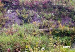 Faible reprise des végétaux dans une pente forte érodée 3 ans après les travaux de génie végétal (ruisseau Ranou, Ville-Marie). La toile de fibres de coco n'a pas pu retenir les semis sous l'action des pluies.
