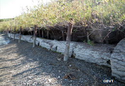 Aménagements en bordure du lac Témiscamingue 3 ans après leur réalisation (ferme Drochers).