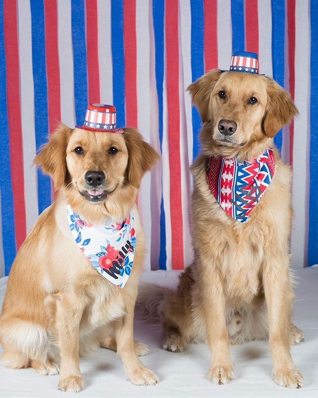 Happy 4th every pawdy! Let's keep our pets safe by keeping them inside during the fireworks 💥!