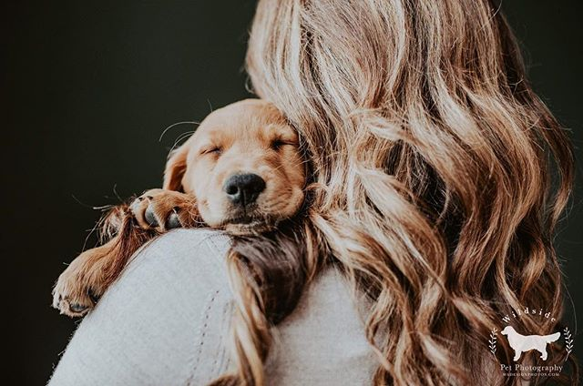 Be still my heart ❤️ oh and also hair goals! . Featuring @murphy_the_therapydog
