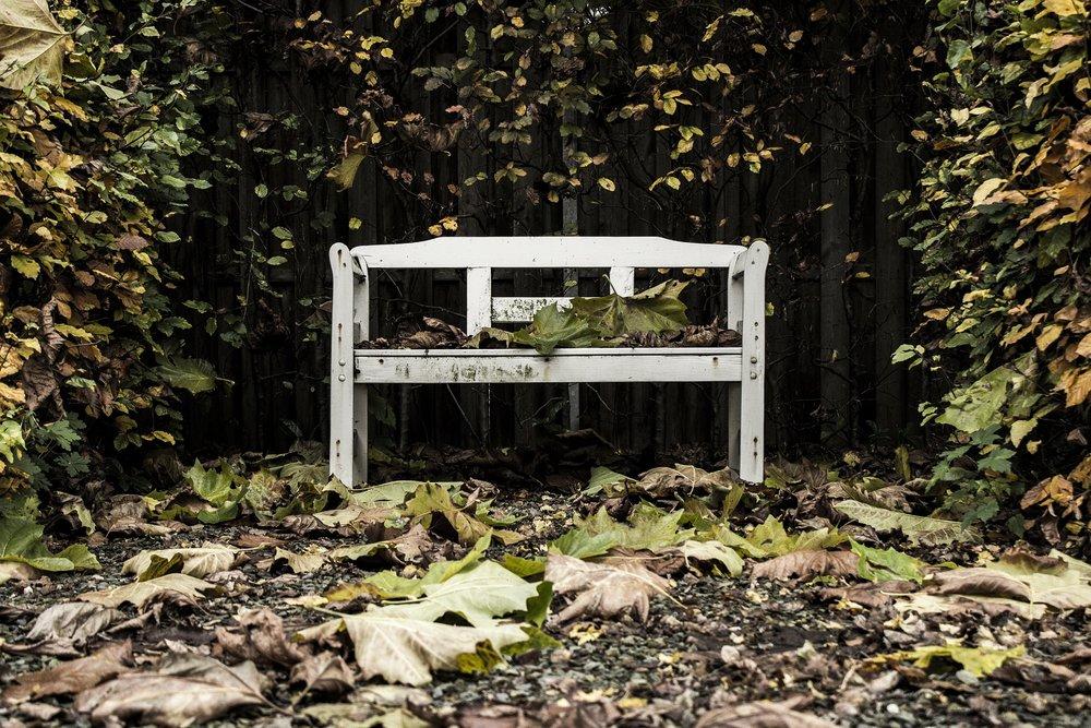bench-933407_1920.jpg