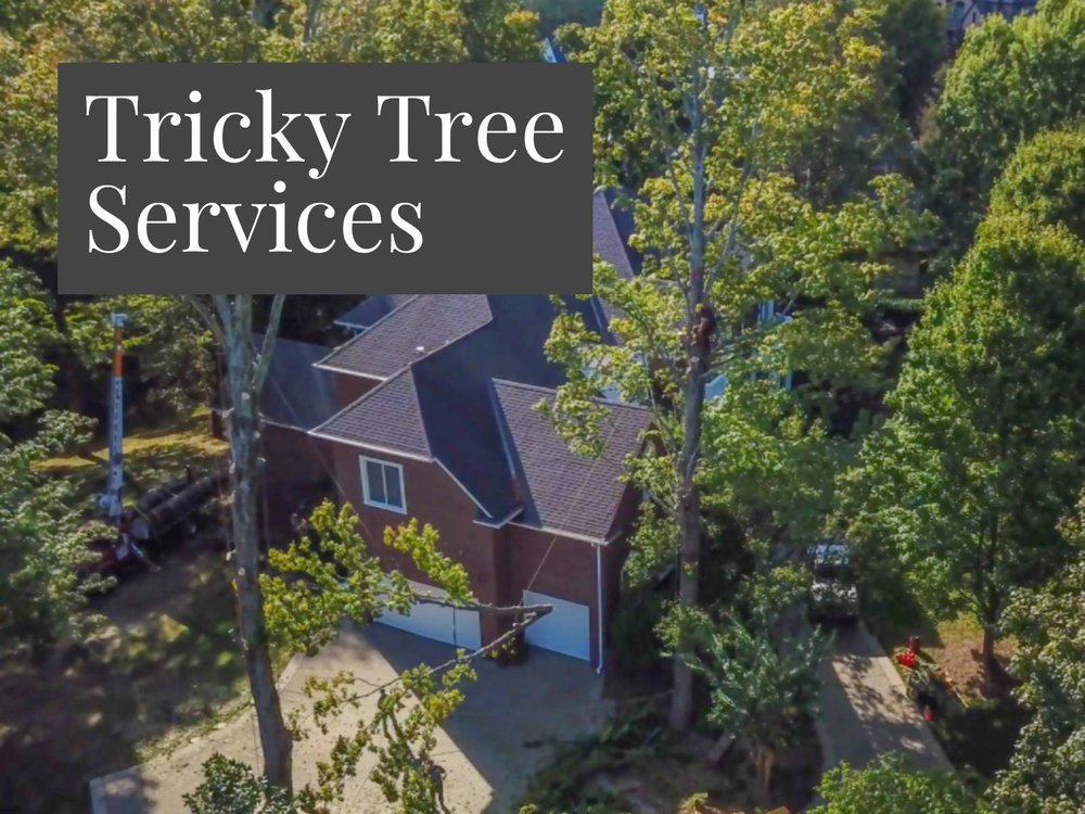 Tree Services Nashville