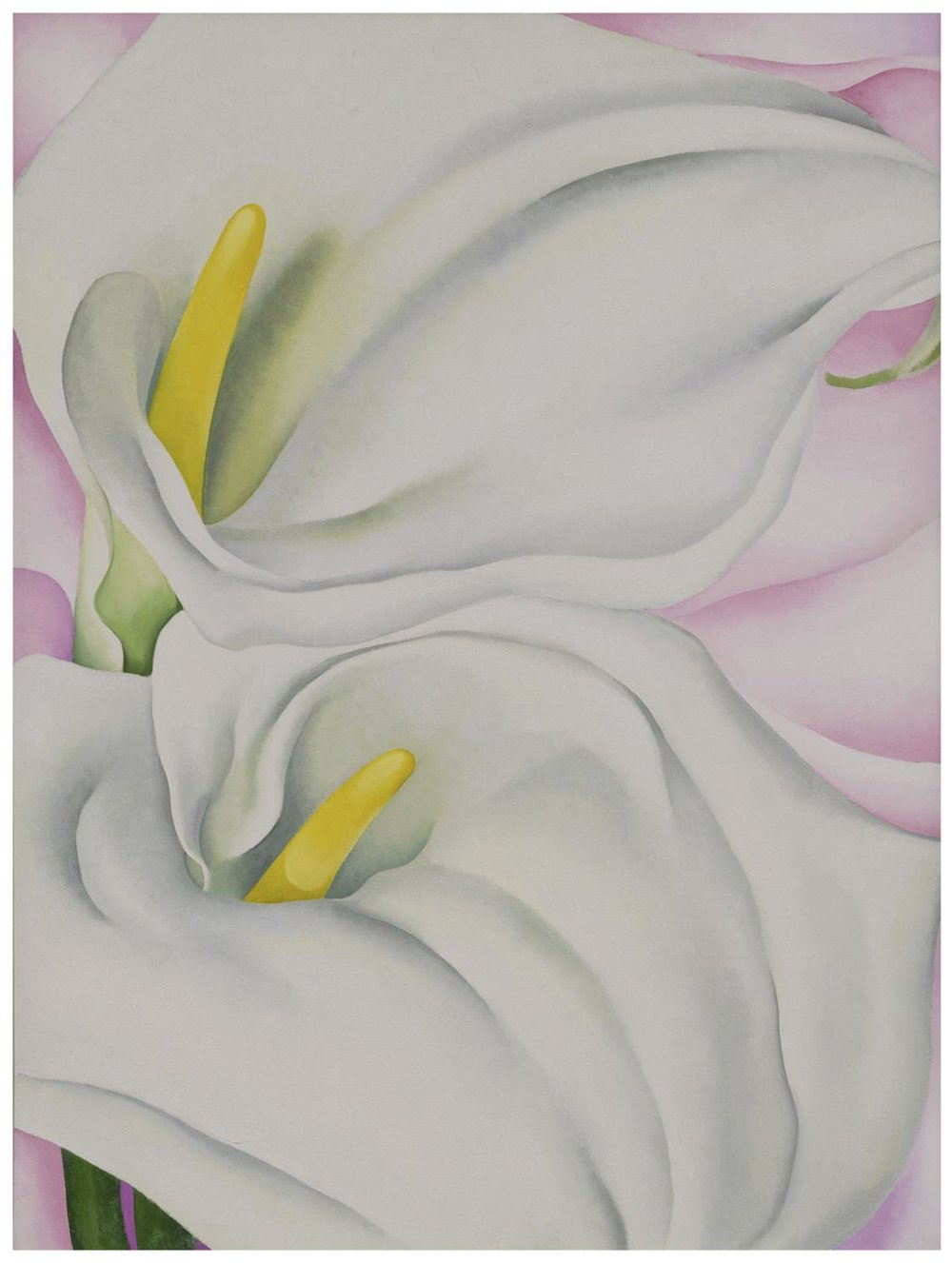Georgia O'Keeffe,  Two Calla Lilies on Pink , 1928 Oil on canvas | Image courtesy of Philadelphia Museum of Art