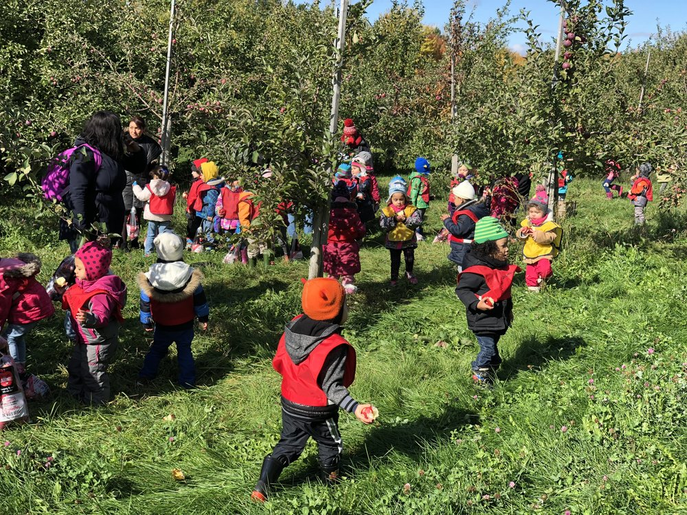 Sortie de pomme