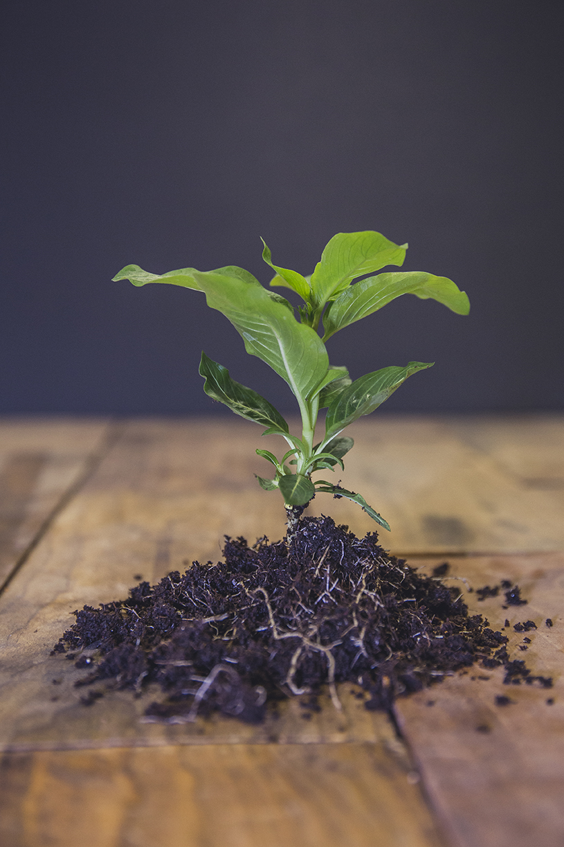 Plant_Sm.jpg