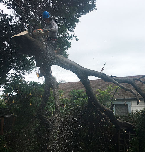man-on-big-branch-cutting-osm.jpg