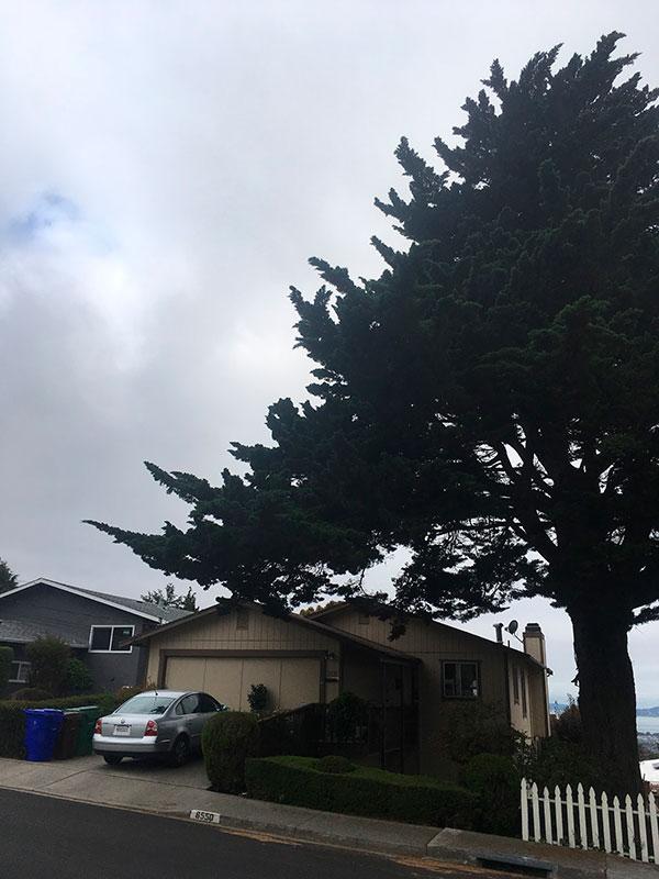 view-pruning-o-600.jpg