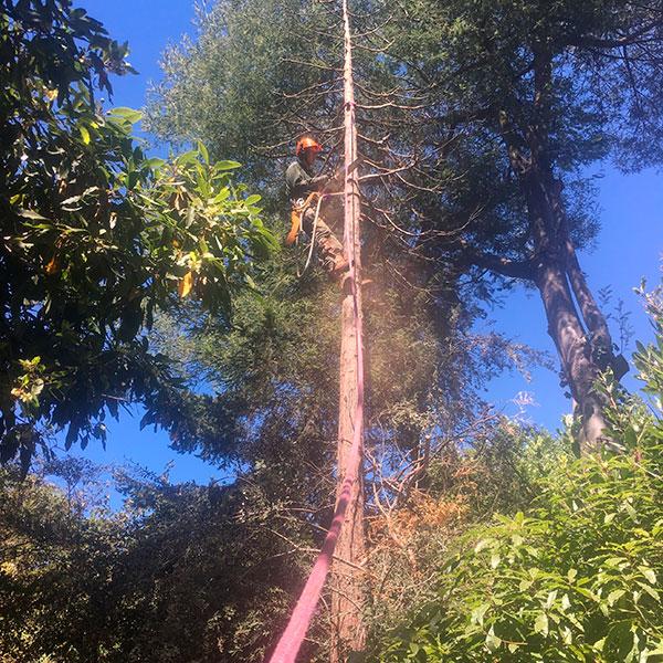pruning-high-in-tree-o-600.jpg