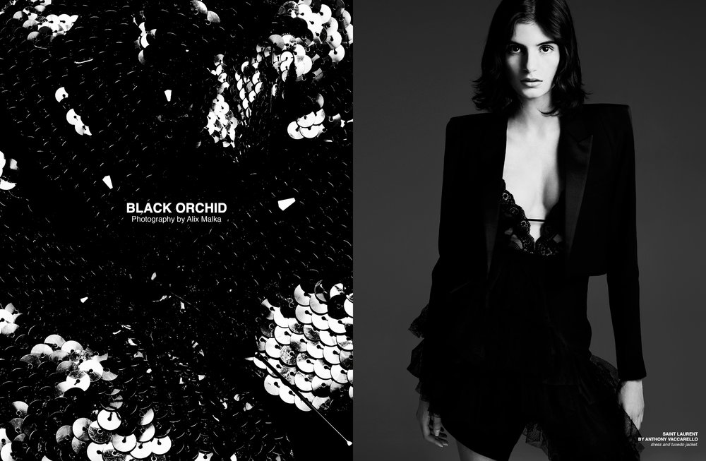 blackorchid1.jpg