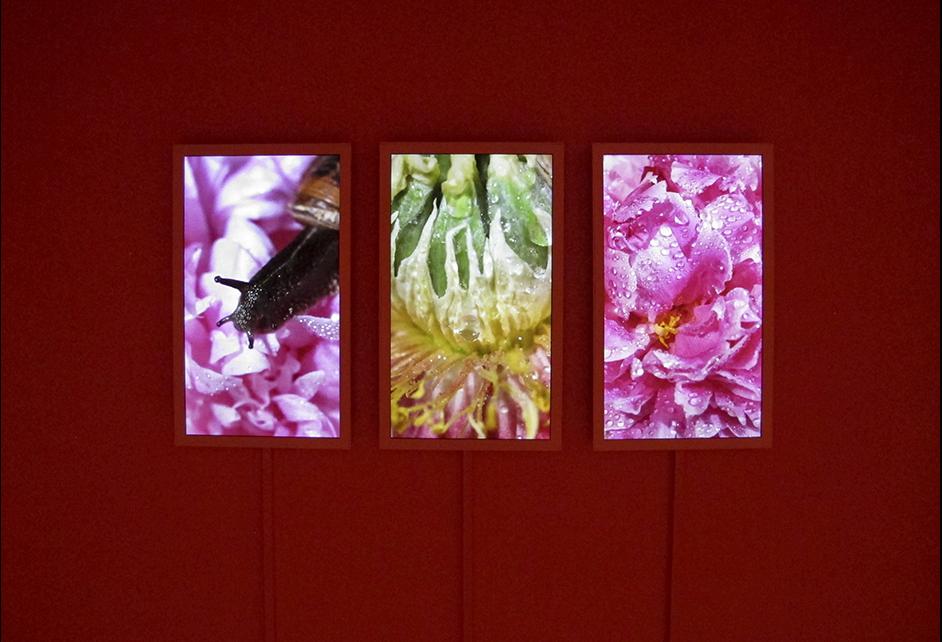 Triptych nature films
