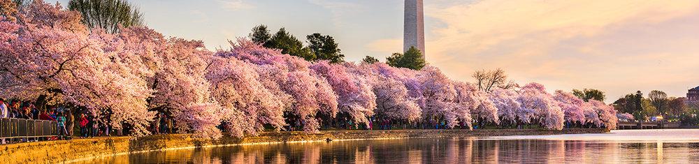 Washington DC banner x.jpg