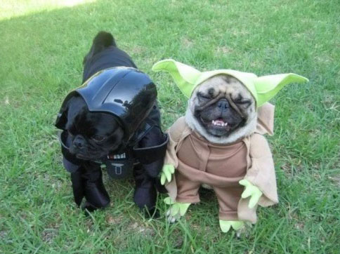 dogs-pugs-darth-vader-yoda-500x396