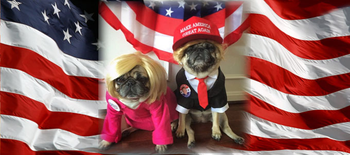 hillary trump policial pugs